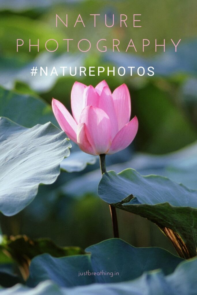 nature photography hashtags for Instagram