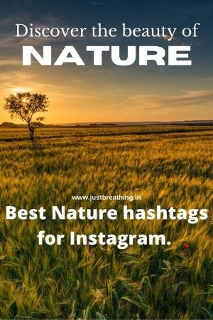 Discover the beauty of nature Best hashtags of green nature for Instagram.